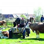 Tanti Livia şi-a dus vacile la târg sperând că le va vinde