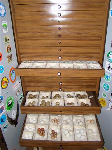 Colectia de oua a ornitologului Ladislau Kalaber este unica in tara (Small)